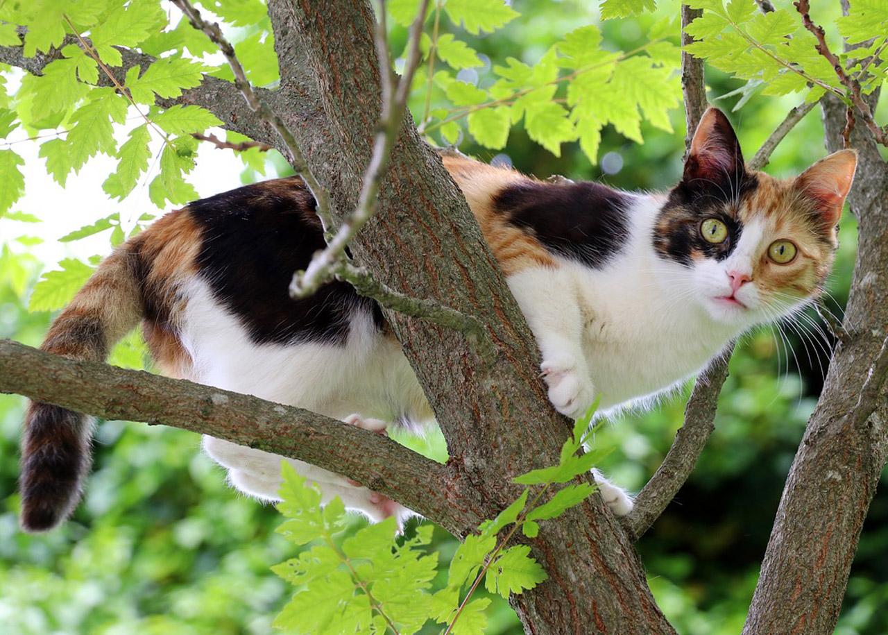 ratowanie kotów