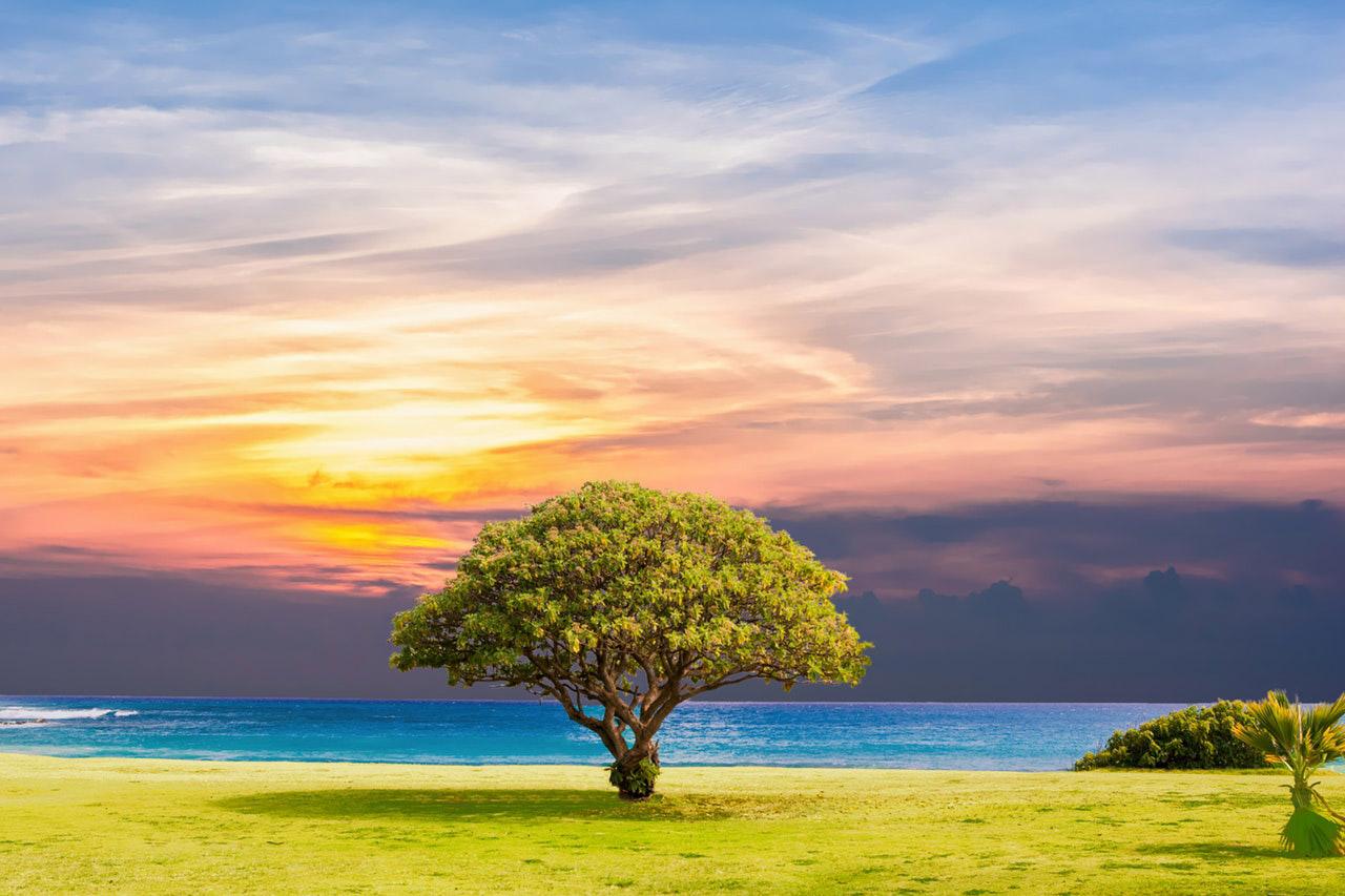 przycinanie koron drzew