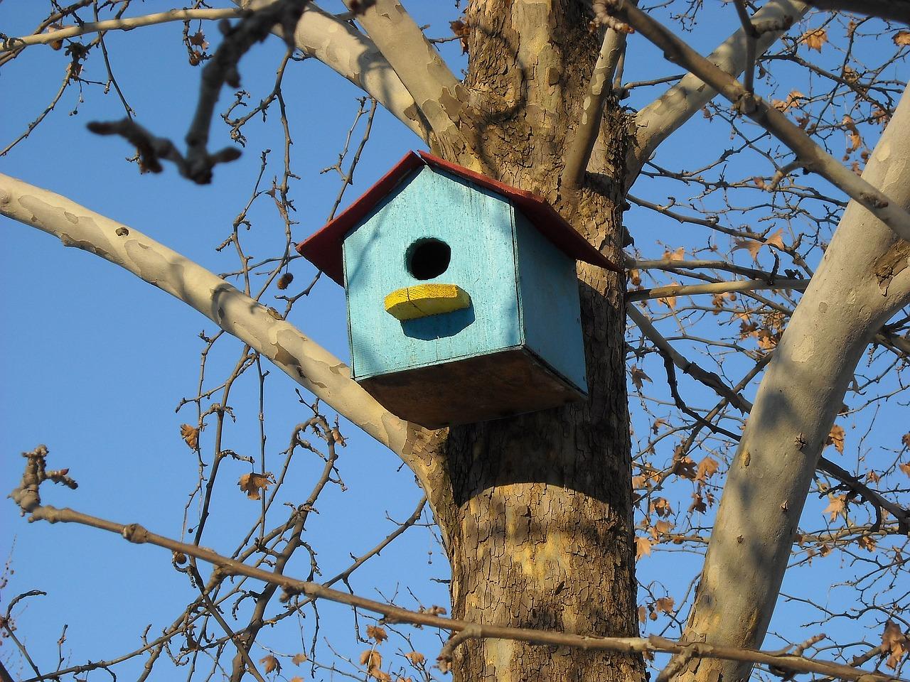 montaż domków dla ptaków