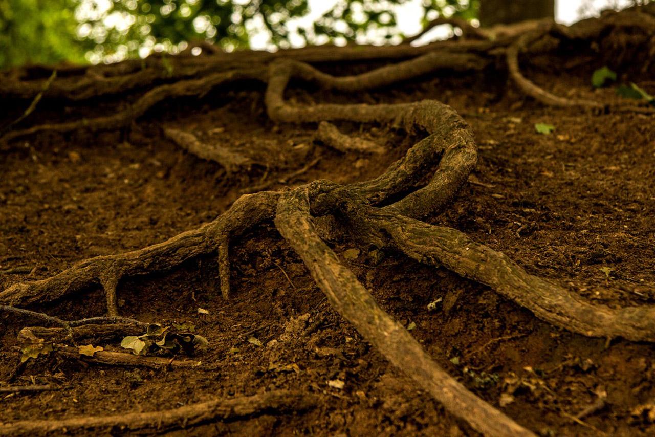 usuwanie korzeni drzew kraków