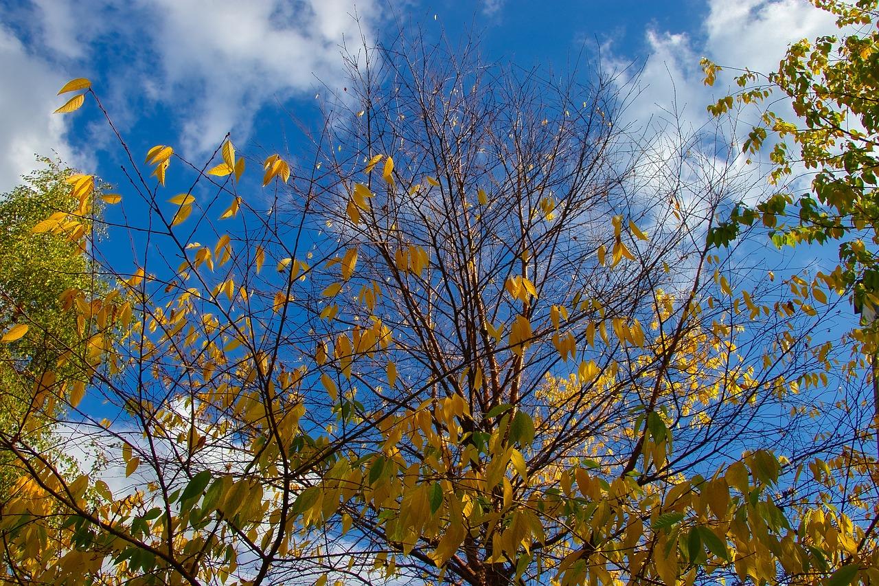 zakładanie zabezpieczeń drzew