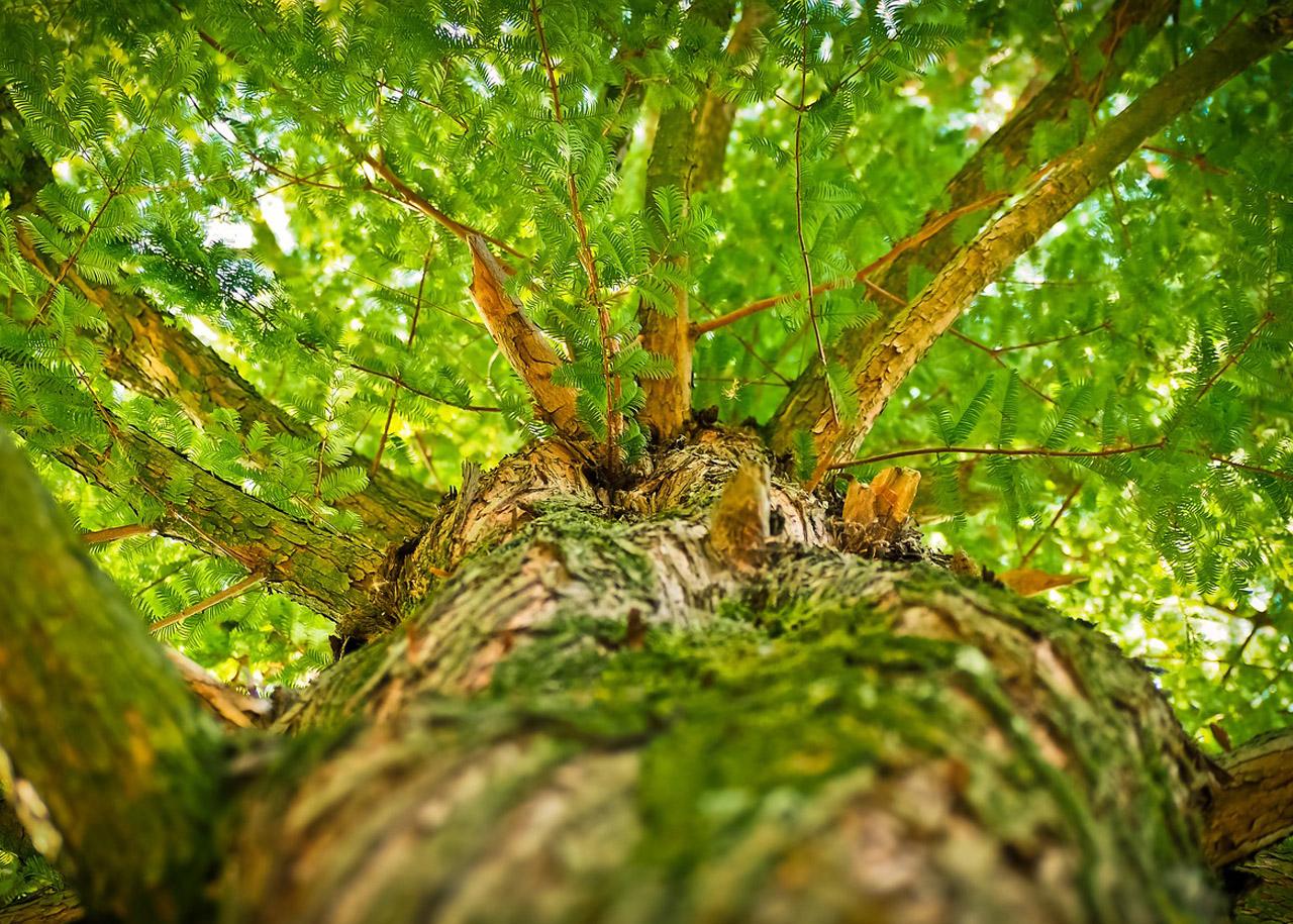 zdjemowanie uwięzionych obiektów z drzewa
